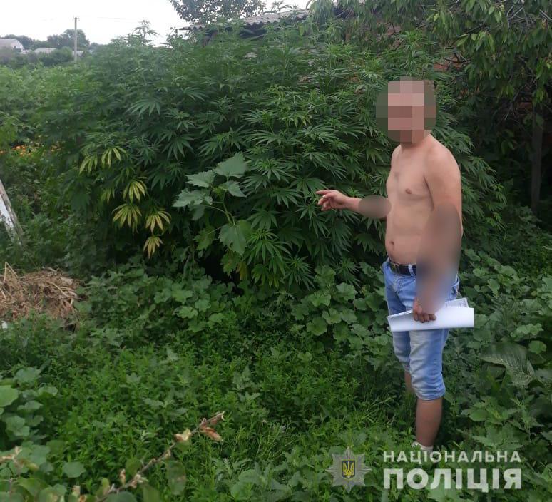 Два харьковчанина вырастили 160 кустов конопли. Новости Харькова