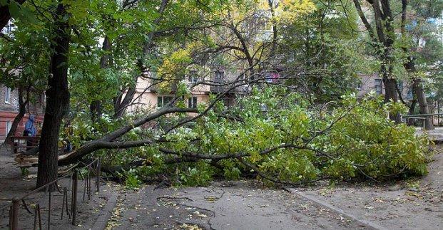 Новости Харькова: Стихия повалила семь деревьев