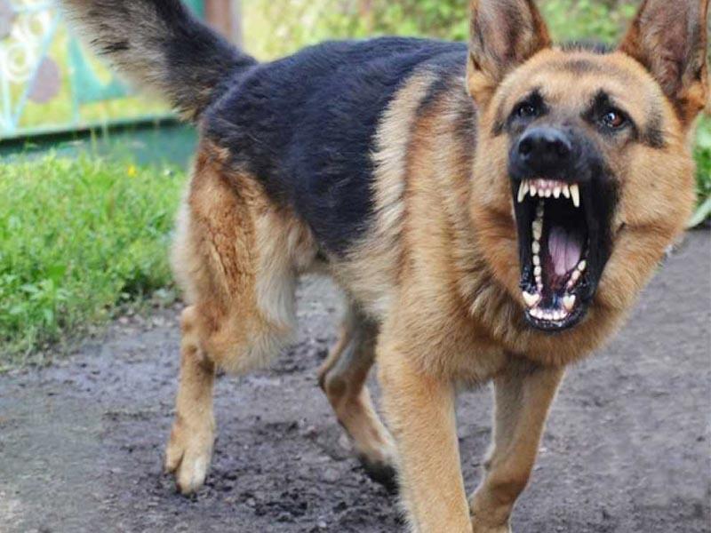 В Харькове участились случаи нападения собак. Новости Харькова