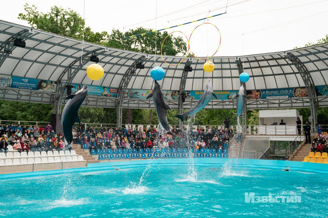 Новости Харькова: Шоу дельфинов - для юных харьковчан