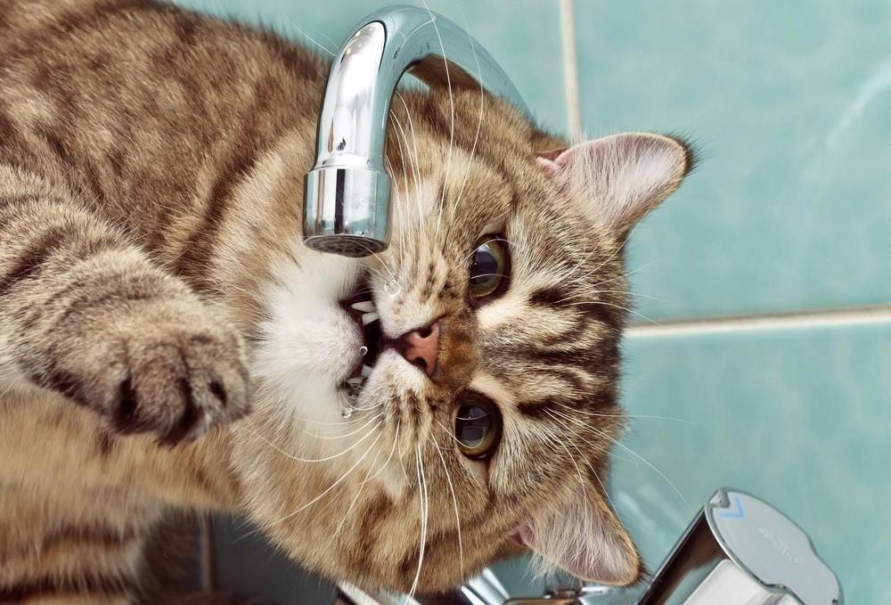 Новости Харькова: в Новобаварском районе отключат воду
