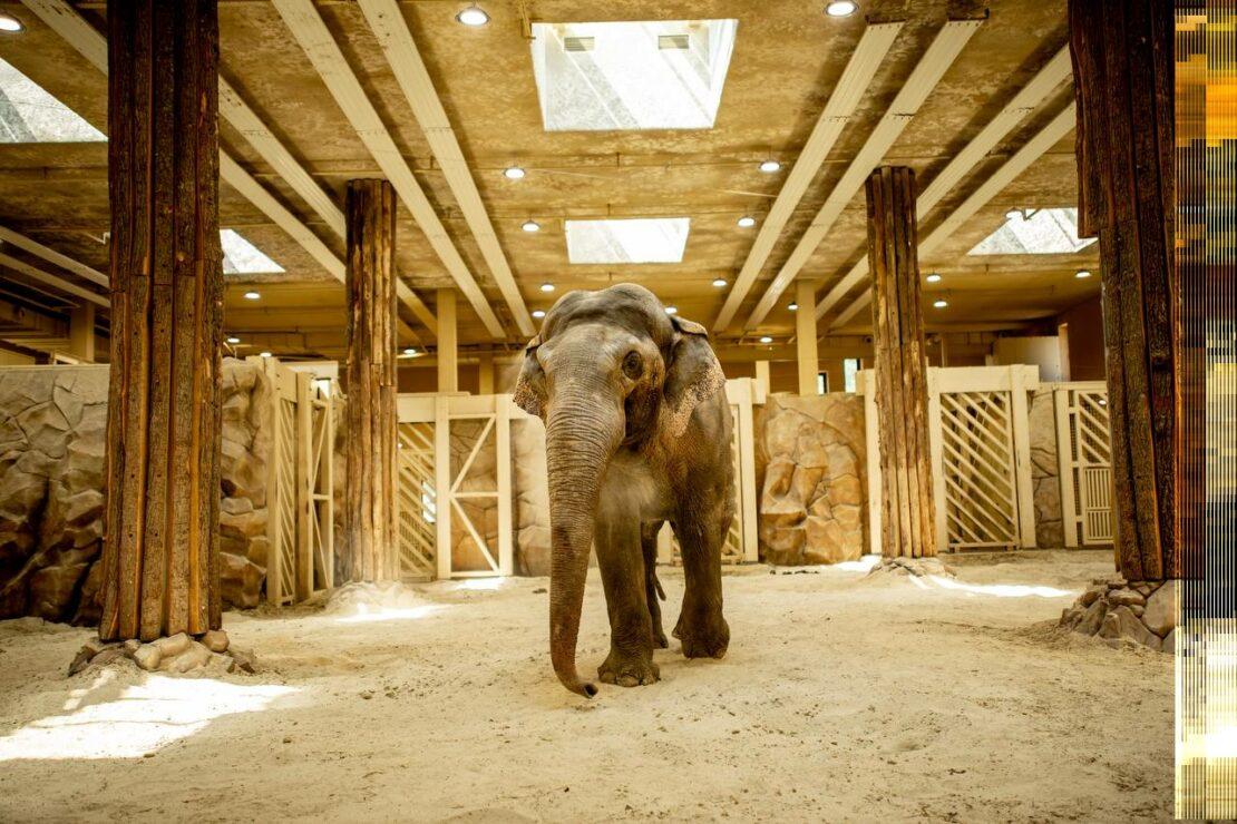 Новости Харькова: слониха Тенди отмечает день рождения