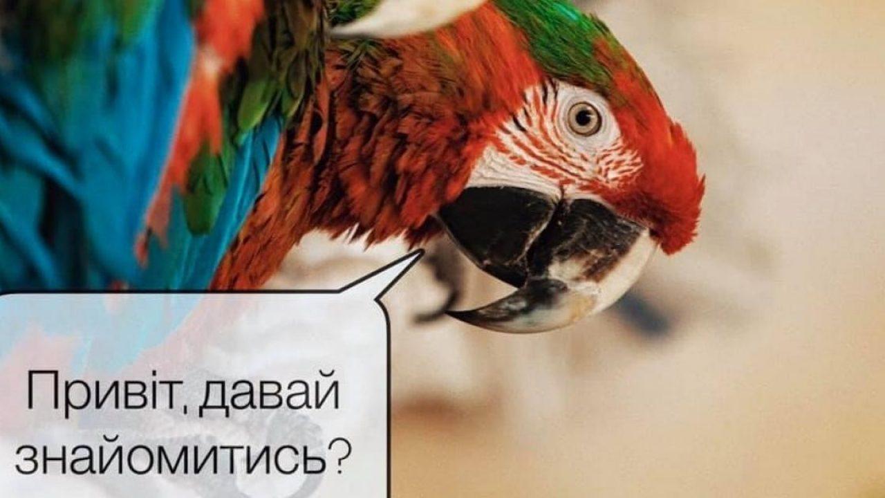 Новости Харькова: Как живет попугай Кернеса в зоопарке