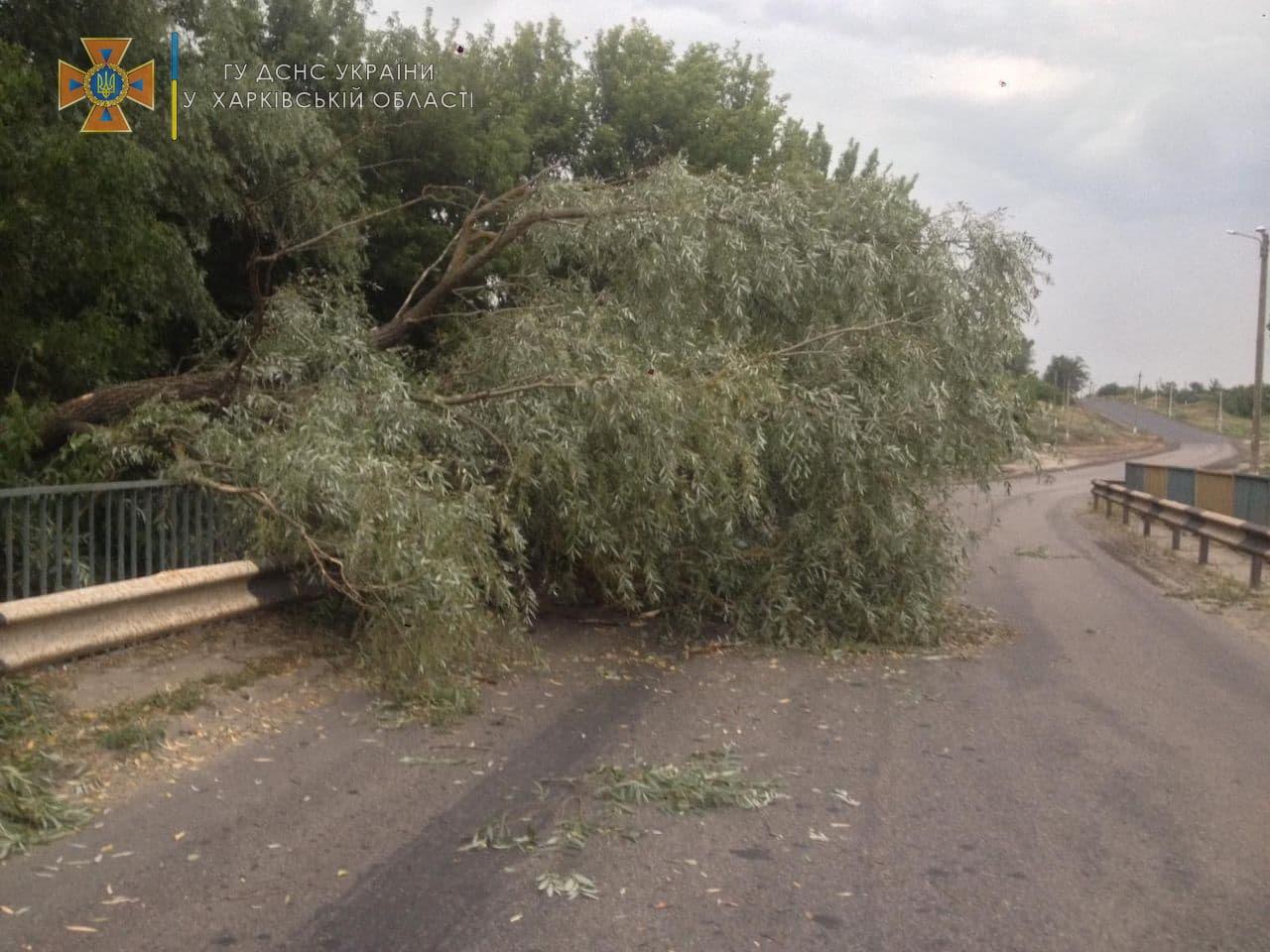 На Харьковщины упавшие деревья перегородили дорогу