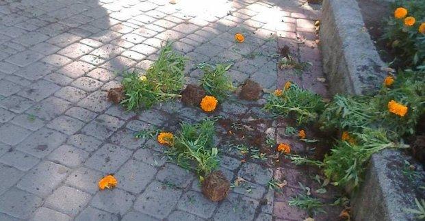 Новости Харькова: В центре вандалы уничтожили клумбу с цветами