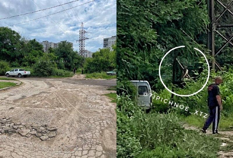 Новости Харькова: Труп на дереве обнаружили прохожие