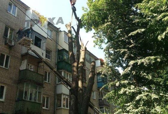 Новости Харькова: дерево  рухнуло на жилой дом