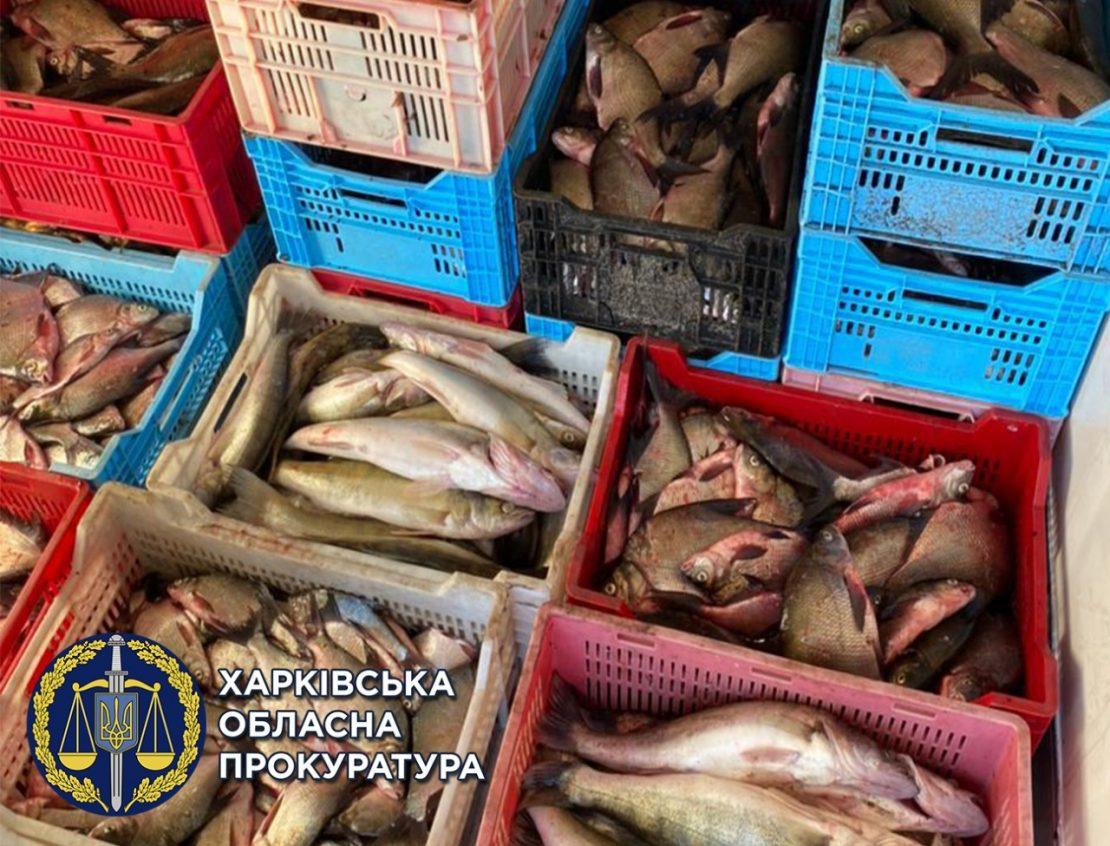 Новости Харькова: На Харьковщине браконьеры снабжали рыбой супермаркеты