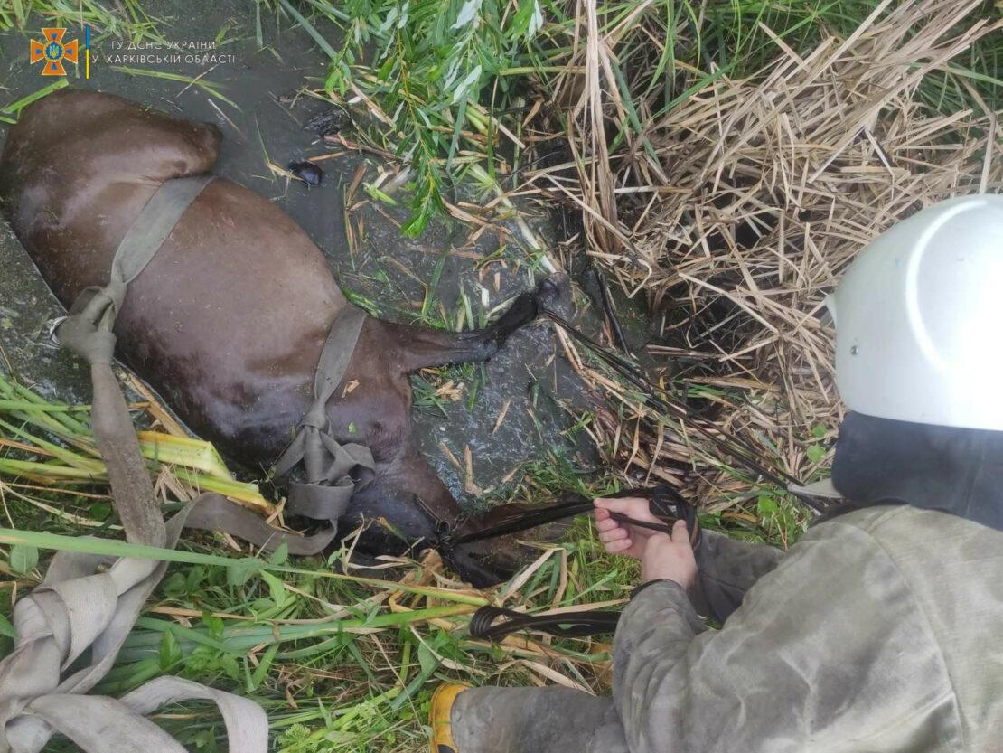 Новости Харькова: в Купянске спасатели вытащили из ямы  коня