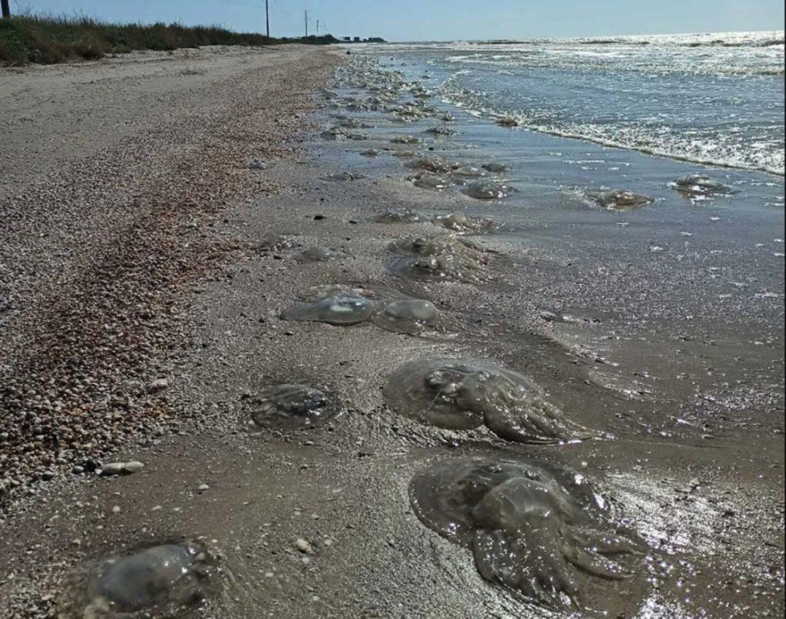 Новости Украины: Отдых в Кирилловке медузы не испортят