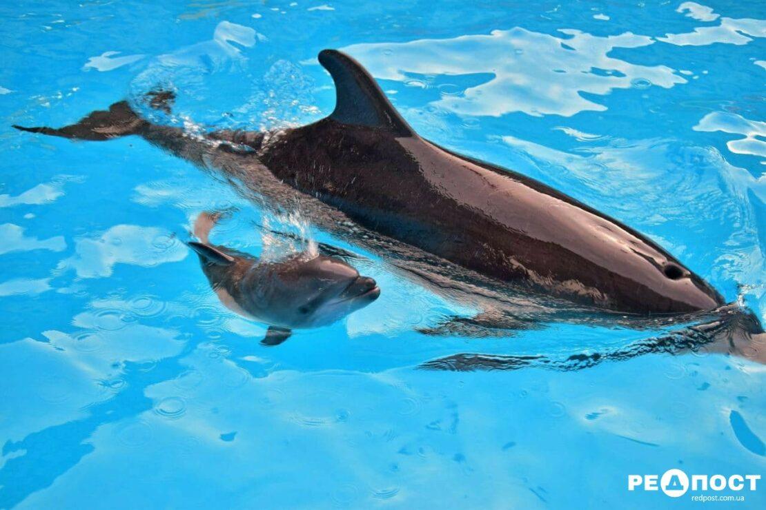 Новости Харькова: в дельфинарии родился третий дельфиненок