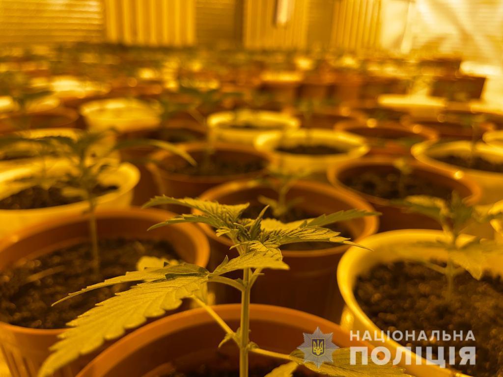 Новости Харькова:Вьетнамец выращивал коноплю