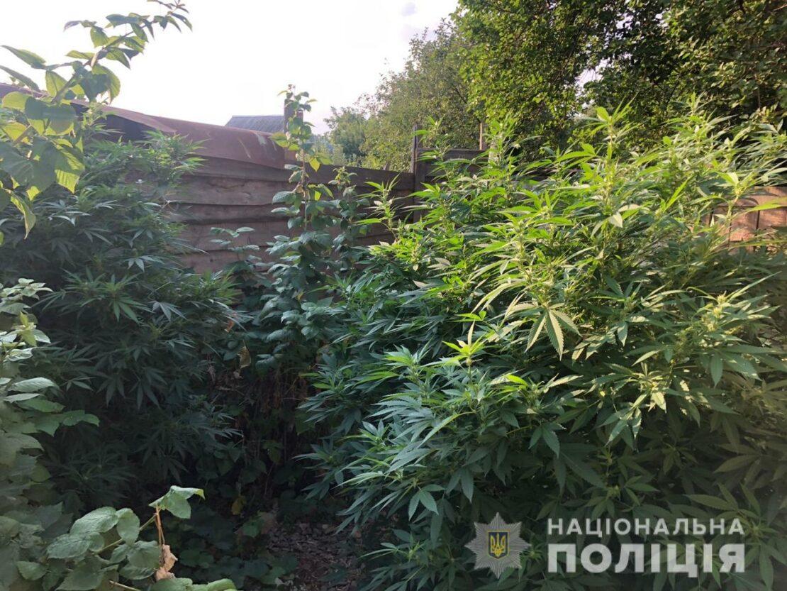 Наркотики Харьков: Харьковчанок словили на торговле коноплей