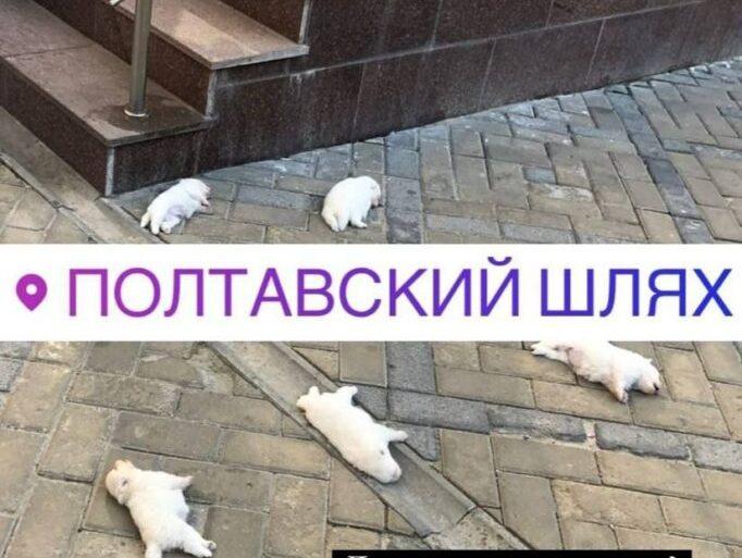 Новости Харькова: Гибель щенков на Полтавском шляхе: полиция открыла дело