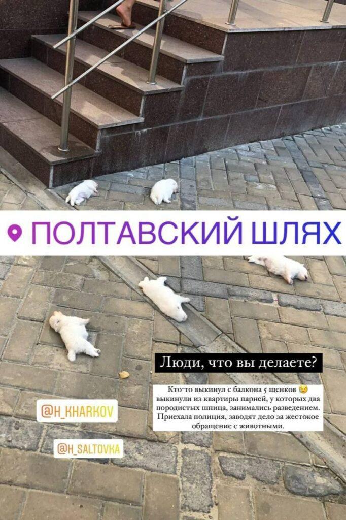 Новости Харькова: На Полтавском Шляхе в окно выбросили щенков