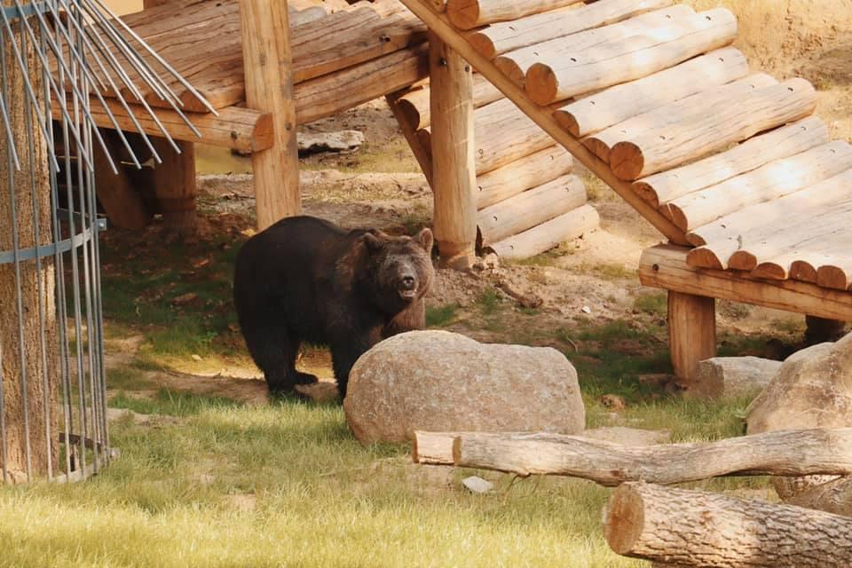 В Харьковском зоопарке медведей переселили в новый вольер