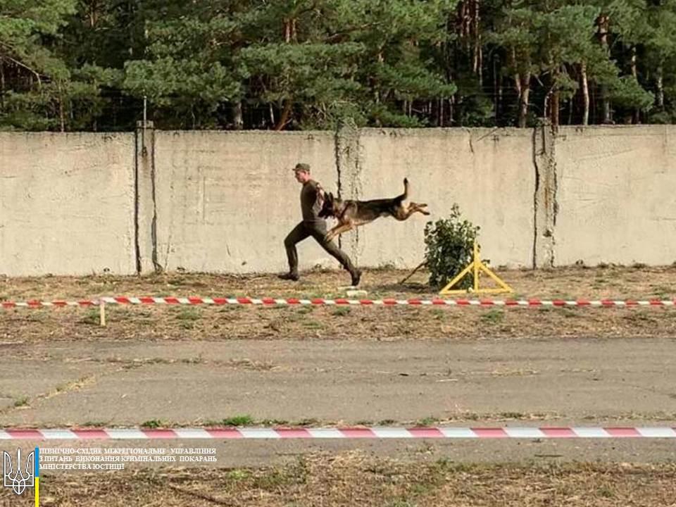 Новости Харькова: В Темновской колонии соревнуются кинологи