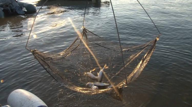 Новости Харькова: Под Харьковом браконьер ловил рыбу экранами
