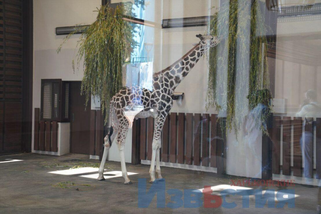 В Харькове открыли обновленный зоопарк