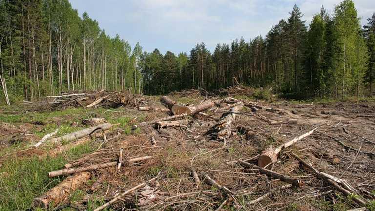 Новости Харькова: Балаклейский лесхоз возместит ущерб от вырубки
