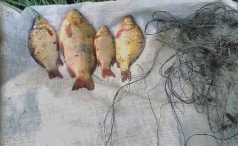 Новости Харькова: Рыба из Красной книги попала в сети браконьера