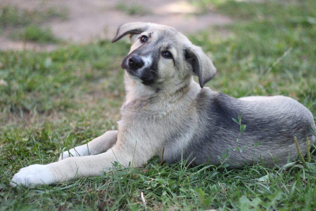 Новости Харькова: Собаки из приюта ищут новую семью
