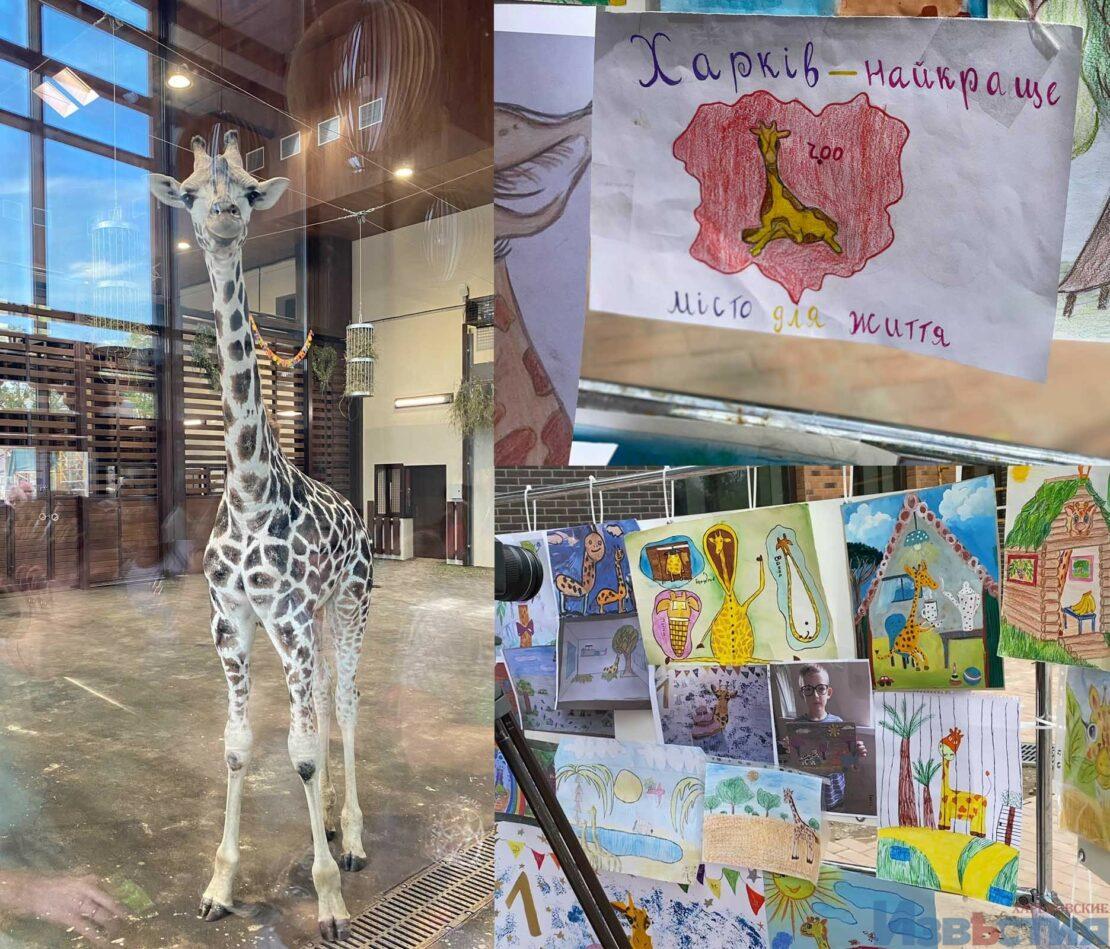 Новости Харькова: В зоопарке отметили день рождения жирафа Демы