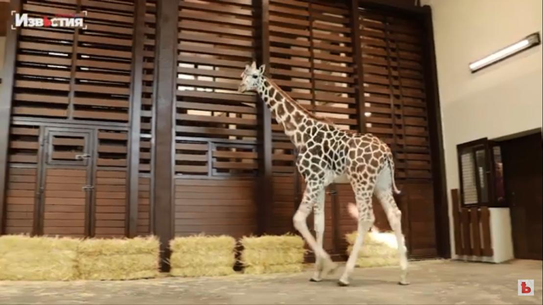 Новости Харькова:Харьковский зоопарк после реконструкции