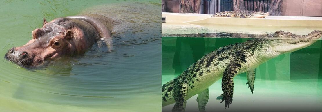 У бегемотихи и крокодилов Харьковского зоопарка теперь новый дом