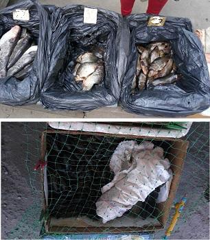 Новости Харькова: На рынках нелегально продавали рыбу и раков