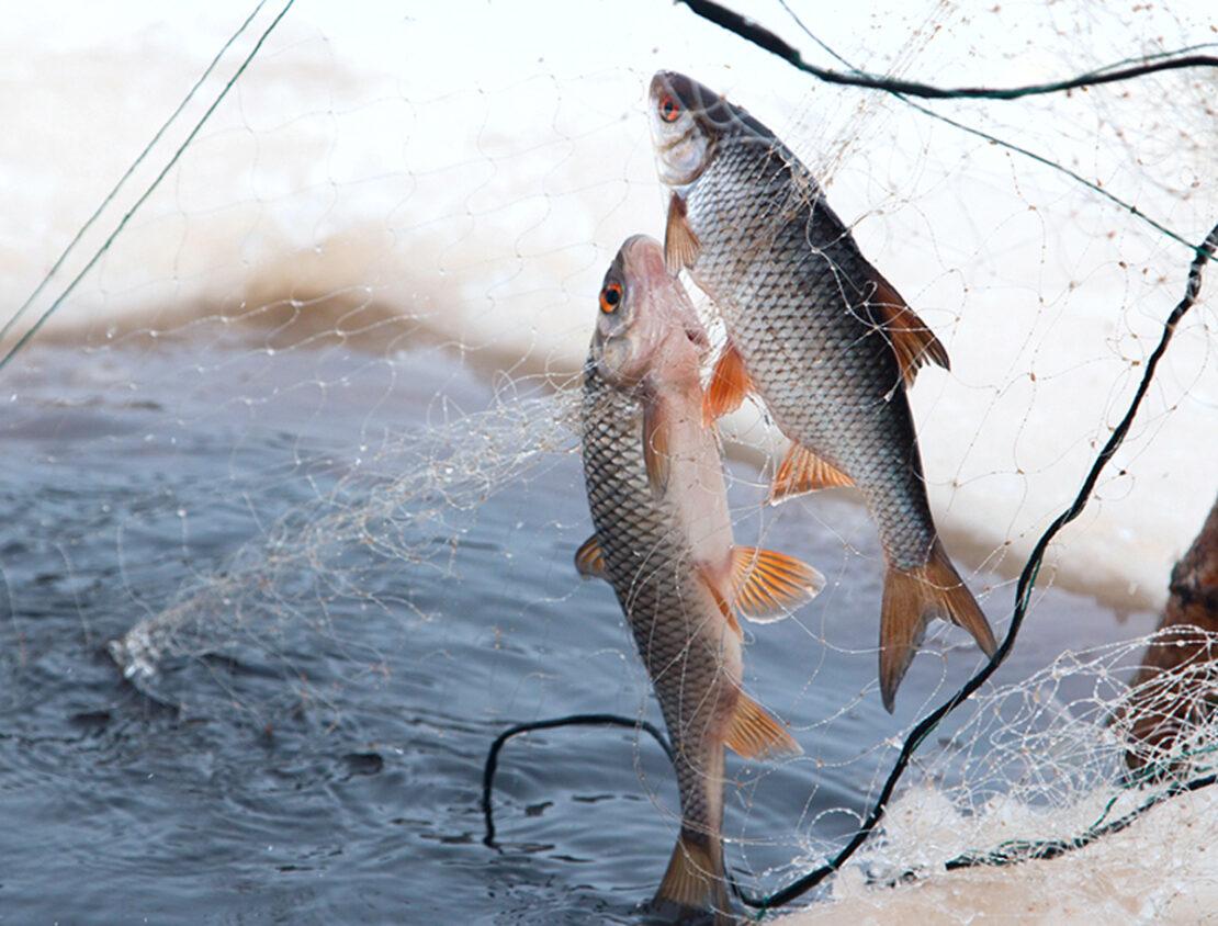 На Оскольском водохранилище в селе Сеньково рыбоохранный патруль выявил браконьеров. Новости Харькова