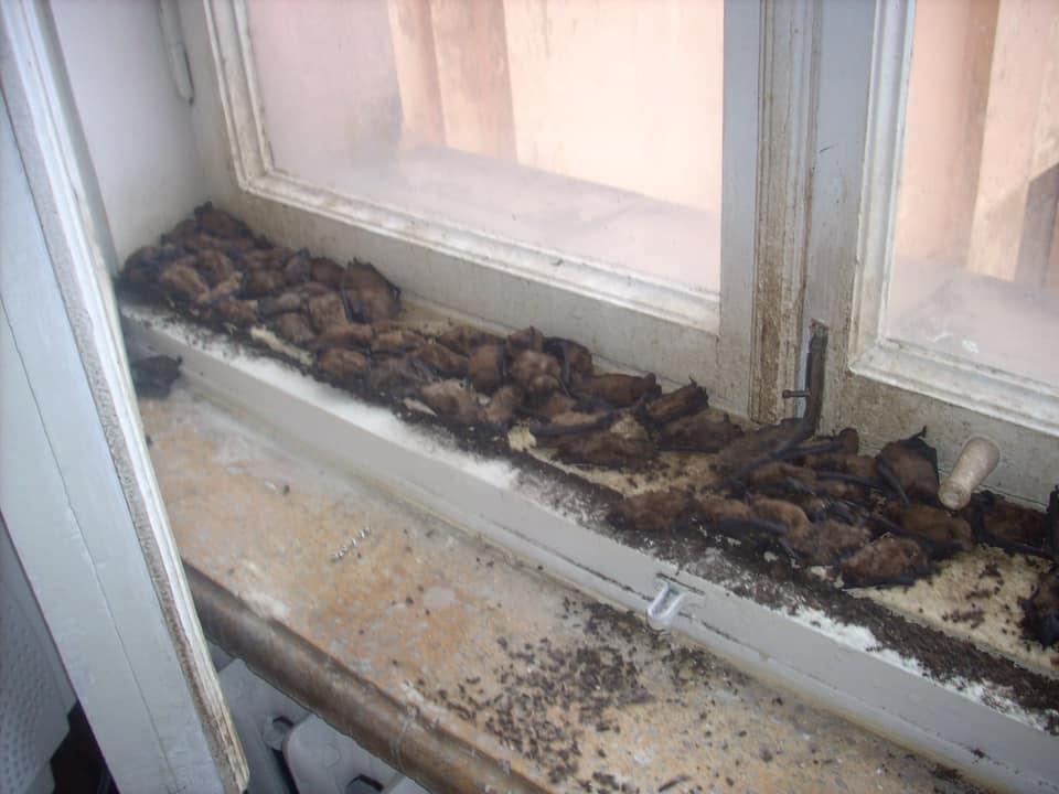 Новости Харькова: В университет Каразина залетели летучие мыши