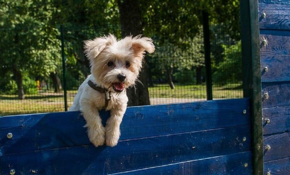 Площадки для выгула и дрессировки собак в Харькове - адреса