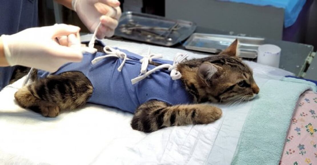 В Харькове можно бесплатно стерилизовать животное: где и кому