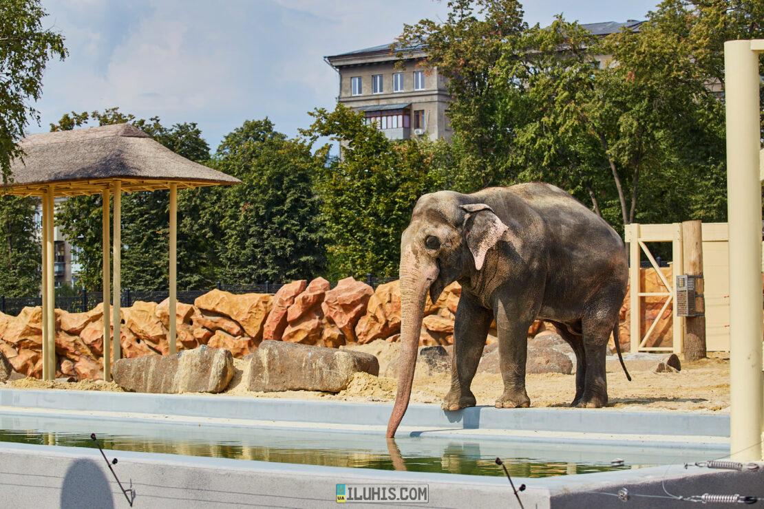 Харьковский зоопарк: до и после реконструкции. История