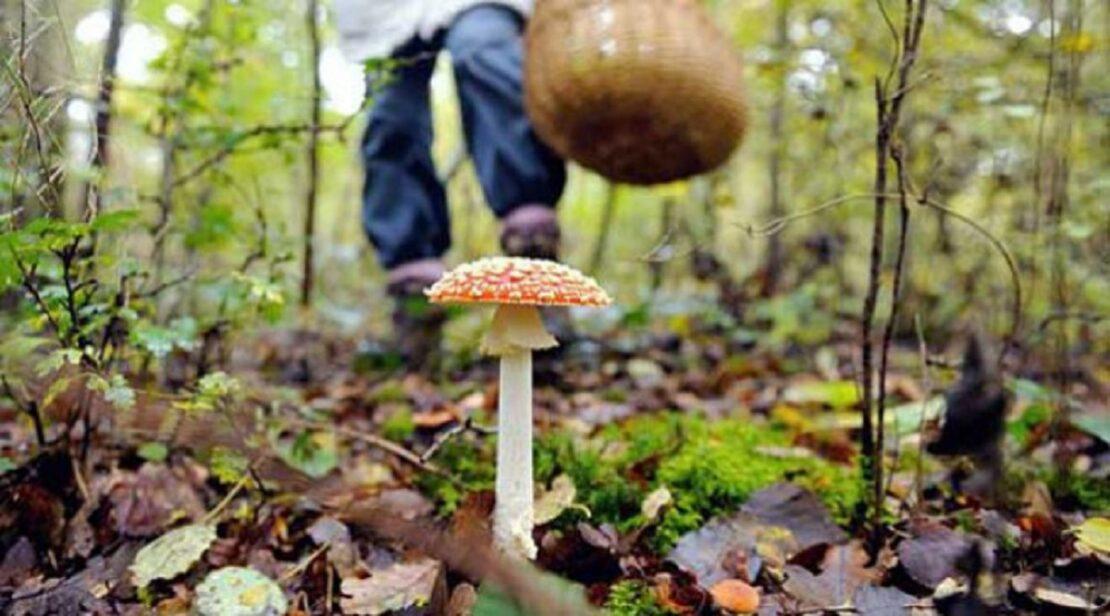 Отравление грибами в Харьковской области в Солоницевской громаде