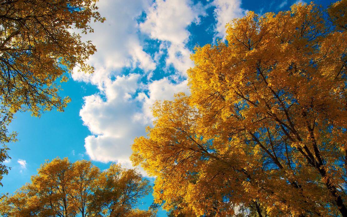 Прогноз погоды в Харькове на 6 октября