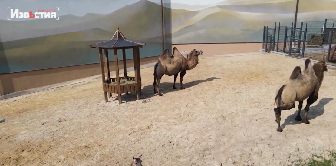 Как в Харьковском зоопарке отмечают день защиты животных