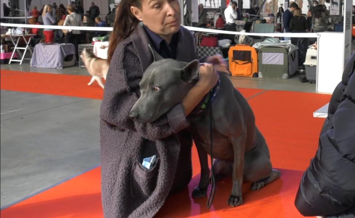 В Харькове на двухдневном фестивале показали лучших собак