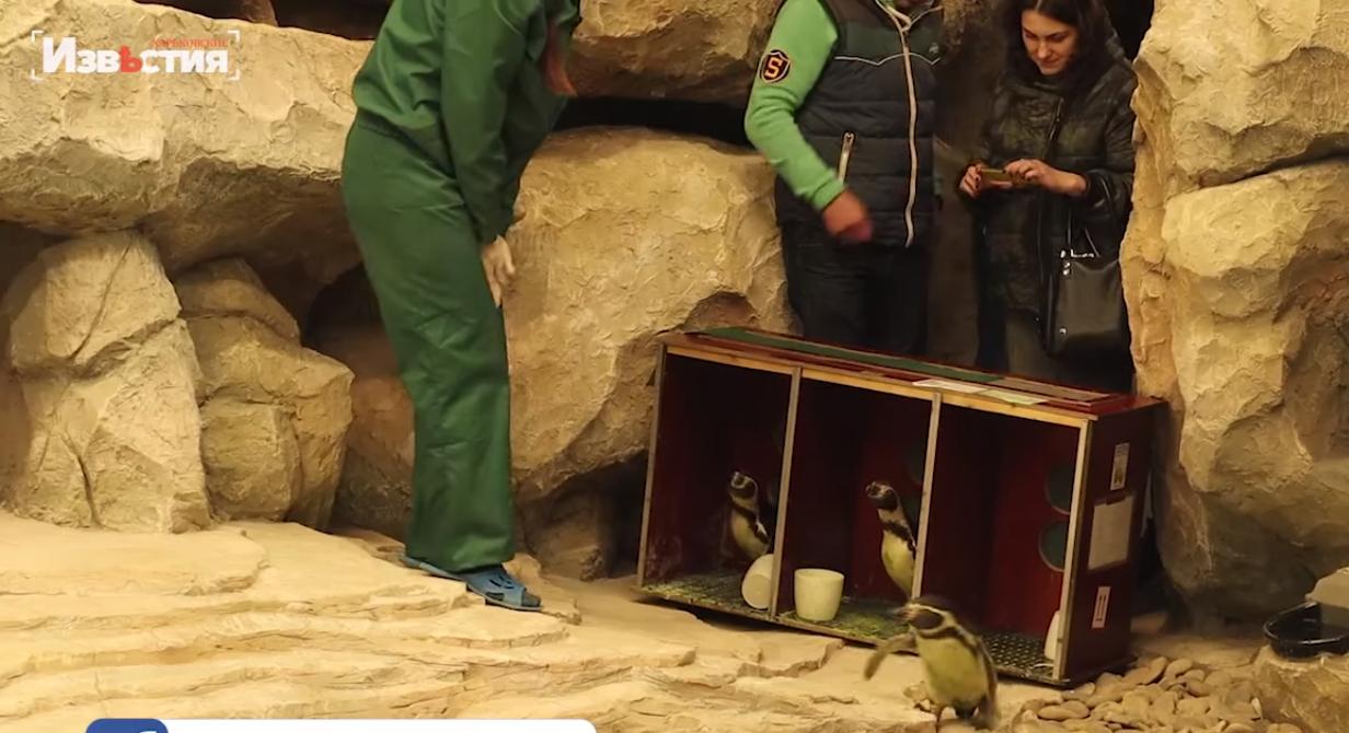 В Харьковском зоопарке появились пингвины
