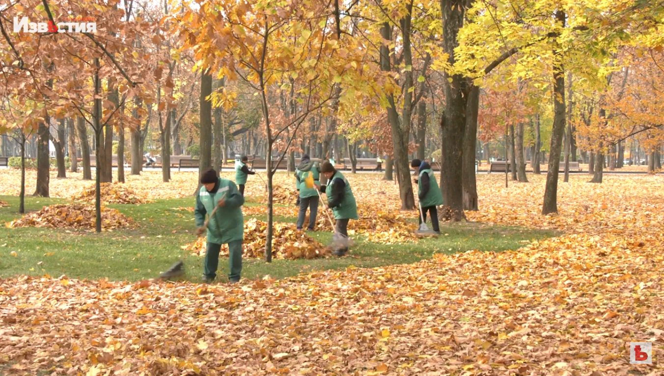 В Харькове продолжается кампания по уборке листьев