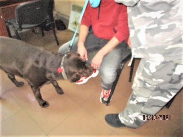 На Гоптовке наркоман из России не прошел контроль у Ив Сен Лорана: служебный пес выявил кокаин и соль