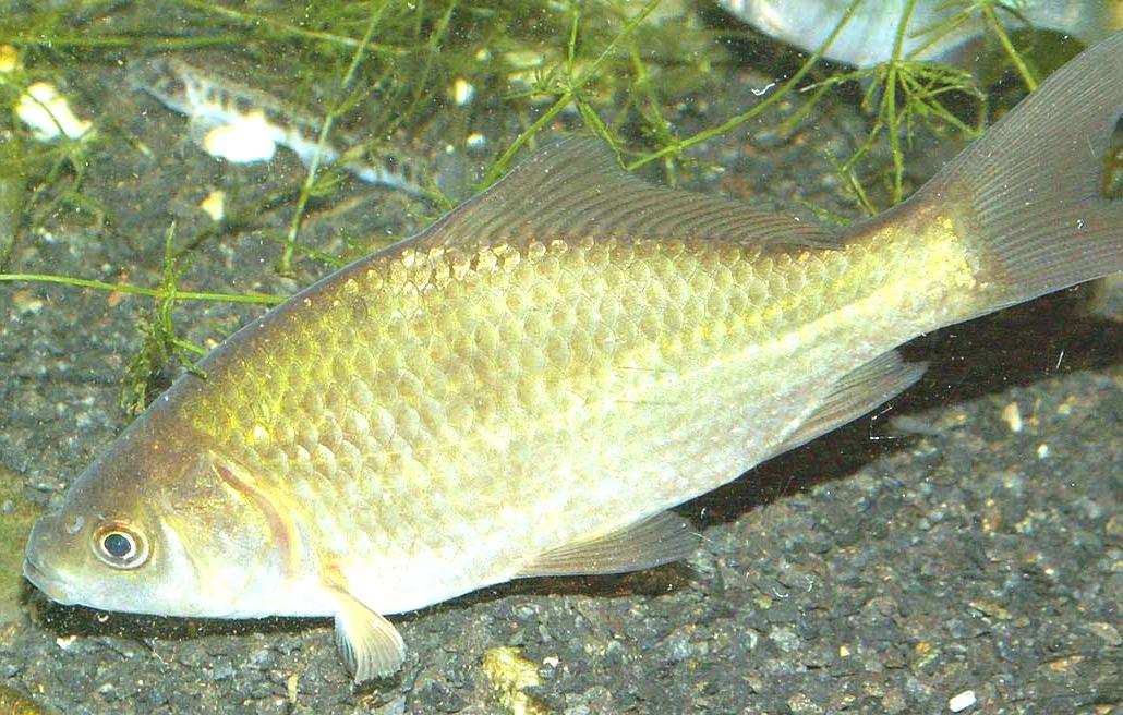В Купянском районе рыбак ловил рыбу запрещенными орудиями