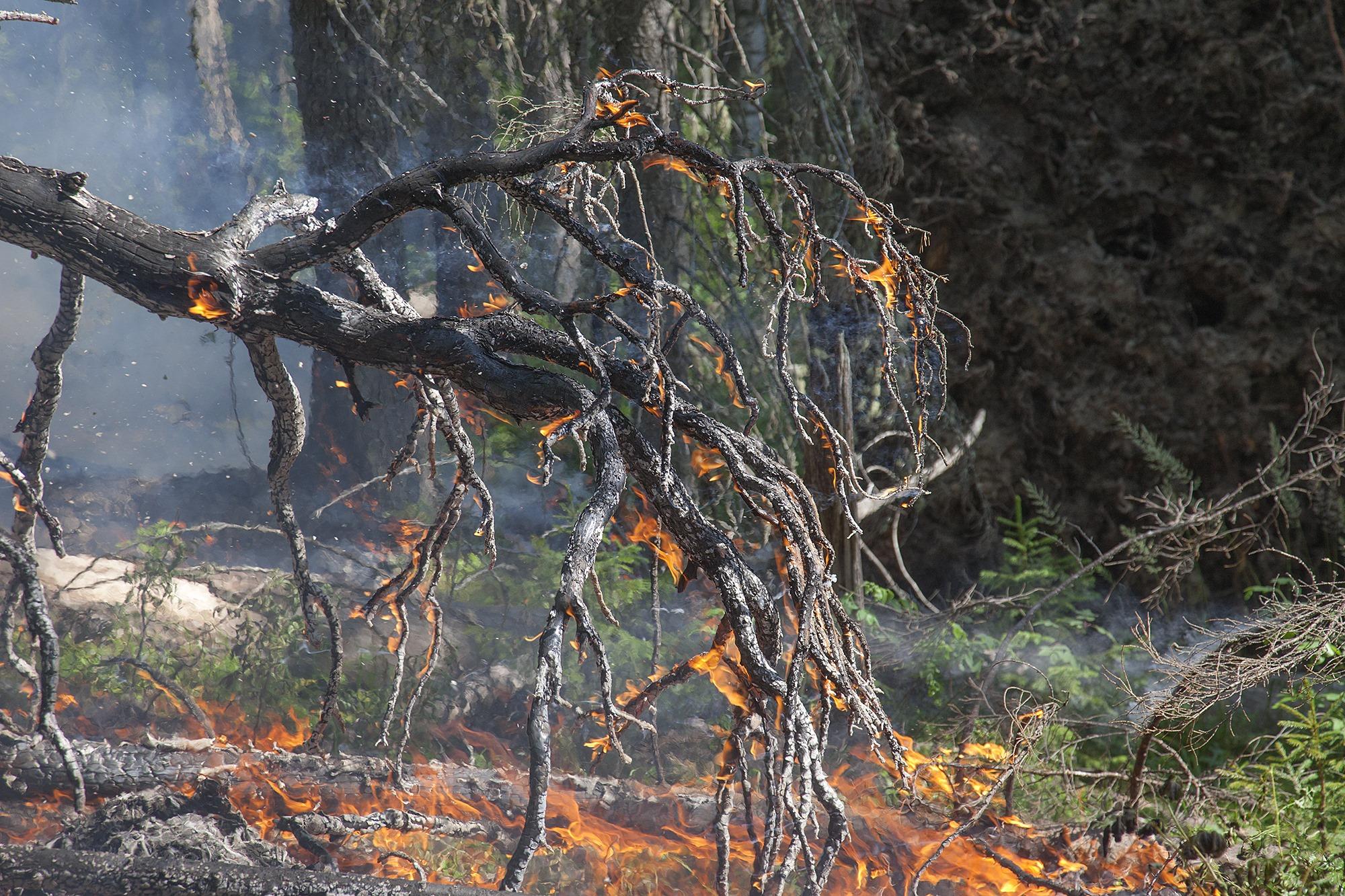 Спасатели напоминают о запрете сжигания листвы